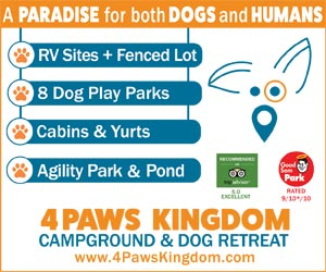 4PawsKingdom paradise for both dogs and humans