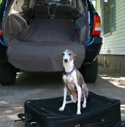 Holiday Road Trips with Your Furry Best Friend | FIDO Friendly