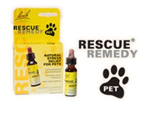 Pet Safe Remedy For Bed Bugs