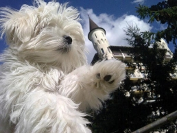Με τον σκύλο στη Νότια Αφρική...