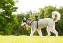 Sony Unveils New Mount for its Action Cam at BlogPaws 2013