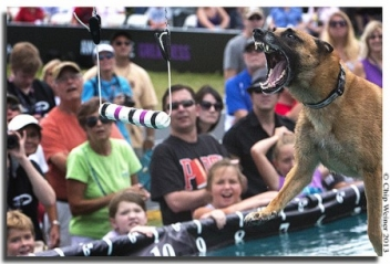 "Purina's Incredible Dog Challenge Canine ""Olympics"" Makes a Splash!"